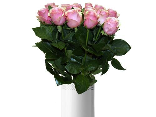 Roos roosa
