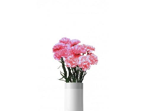 Nelk roosa